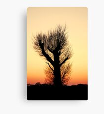 """THE HAIRY WAVING TREE"" Canvas Print"