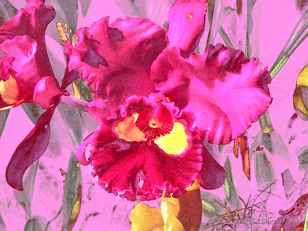 Orchid Collection - 4 by Marcia Rubin