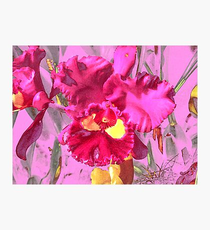 Orchid Collection - 4 Photographic Print