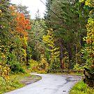 Autumn road in Tyrol by Elzbieta Fazel
