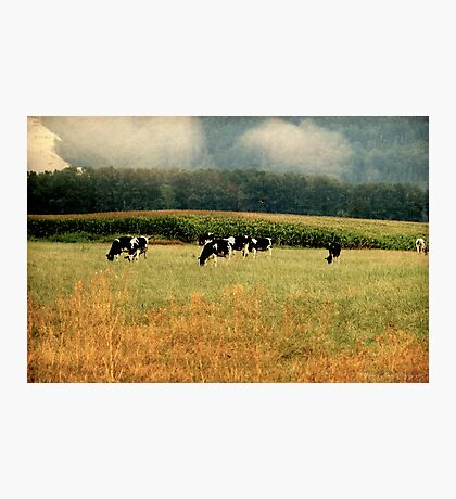 Holsteins in the Country Photographic Print
