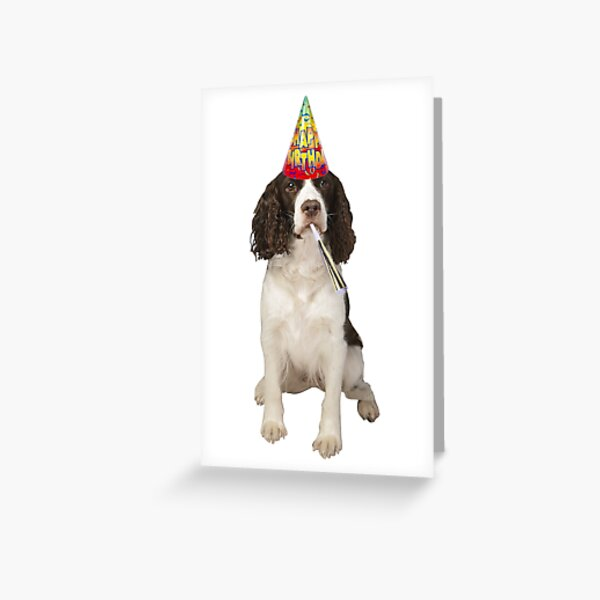 English Springer Spaniel Birthday Greeting Card