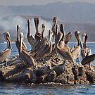 Pelican briefing by Alla Gill