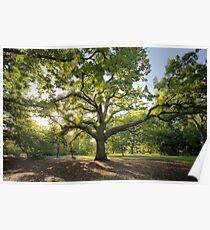 Oak Lawn Royal Botanical Gardens Melbourne Poster