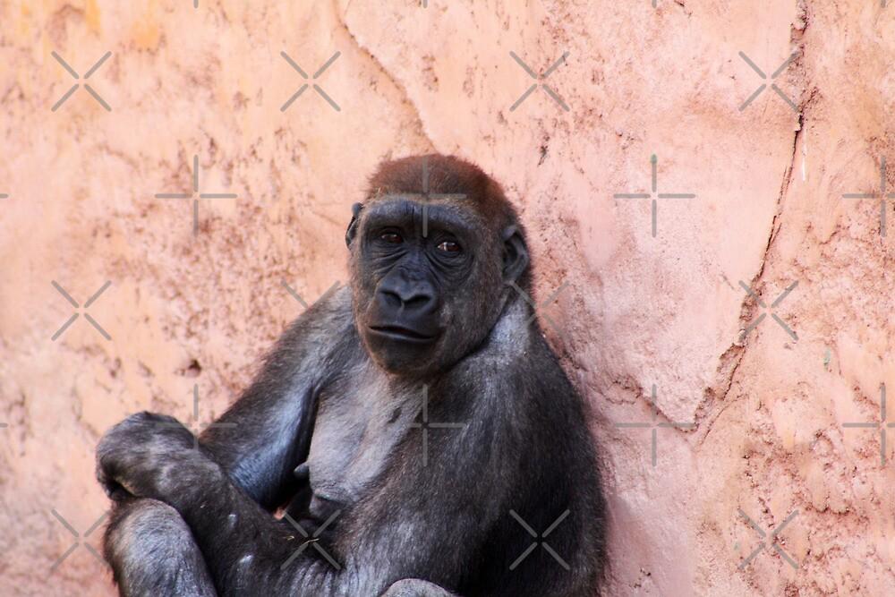 Western Lowland Gorilla by Alyce Taylor