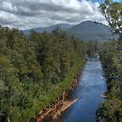 Huon River From The Tahune Airwalk by mspfoto