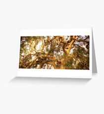 River Red Gum Greeting Card