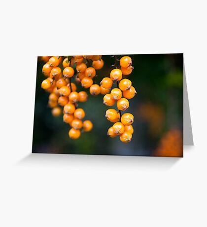 orange berries Greeting Card