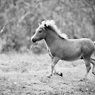 The Frisky Little Pony by David de Groot