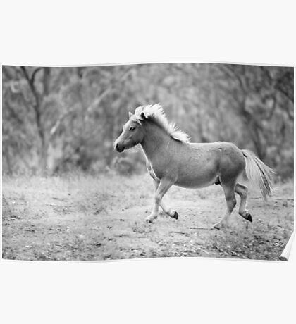 The Frisky Little Pony Poster