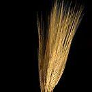 Wheat Straws by snehit