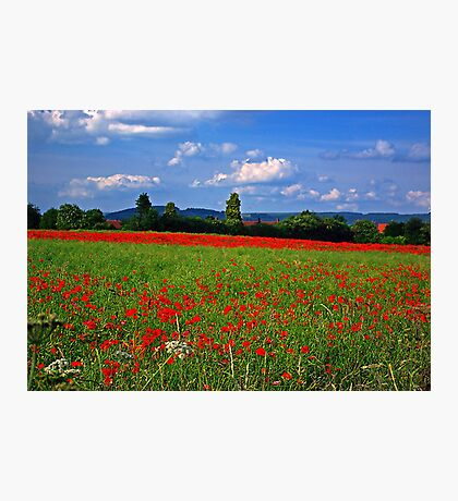 Poppy Field  (Early May) Photographic Print