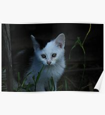 Black and White Kitten Poster