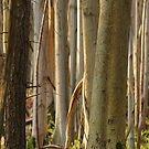 Forest trees at Denbies by cherryannette