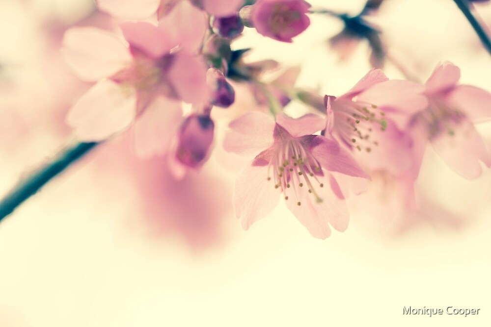 Blossom by M R Cooper
