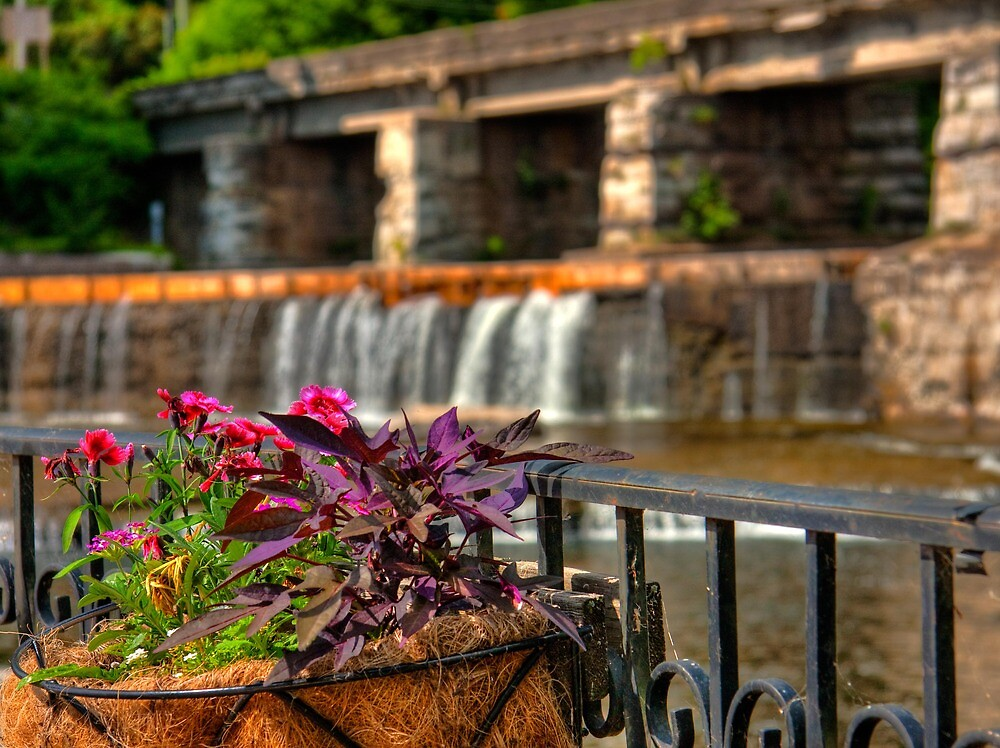 Almonte Flowers by Falls by Benjamin Brauer