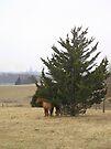 Horses In the Landscape by Carla Wick/Jandelle Petters