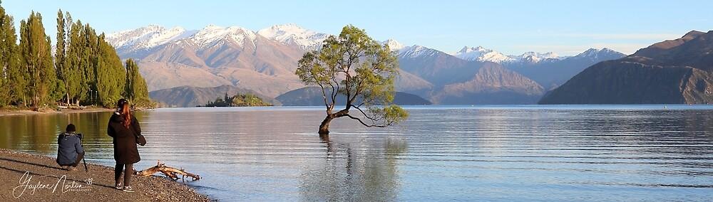 That Wanaka Tree - New Zealand by Gaylene Norton