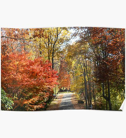 Brilliant Colors on a Fall Day Poster