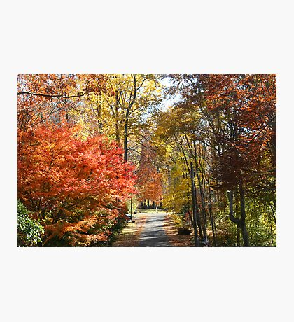 Brilliant Colors on a Fall Day Photographic Print