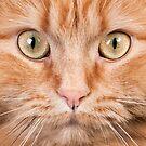 Orange cat face by natalies
