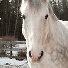 white horse outdoors by natalies