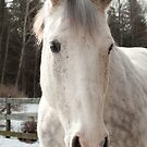 white horse outside by natalies