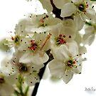 Spring Blossoms V by Mattie Bryant