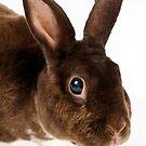 soft brown rabbit by natalies