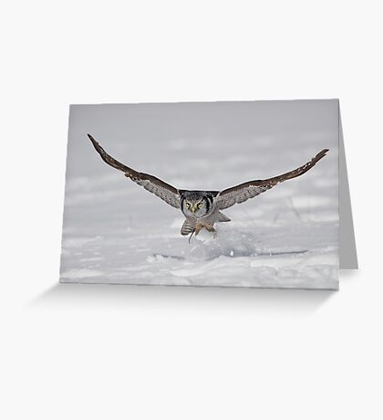 On the Fly...  Greeting Card
