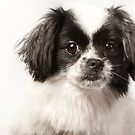 little dog by natalies