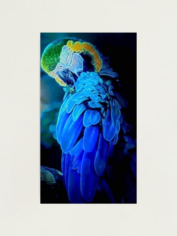 Alternate view of Blue Bird  Photographic Print