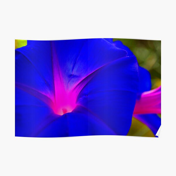 MORNING GLORY 02 Poster