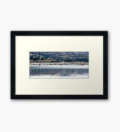 Lake Wakatipu ducks Framed Print