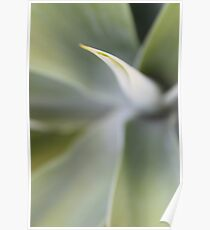 Agave Blur - Agave attenuata Poster