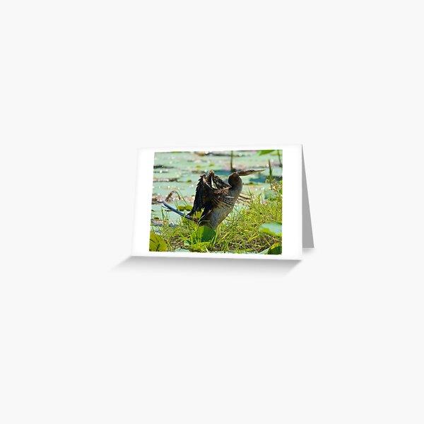NT ~ MARINE BIRD ~ Australasian Darter by David Irwin 071119 Greeting Card