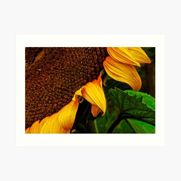SUNFLOWER 02. Art Print