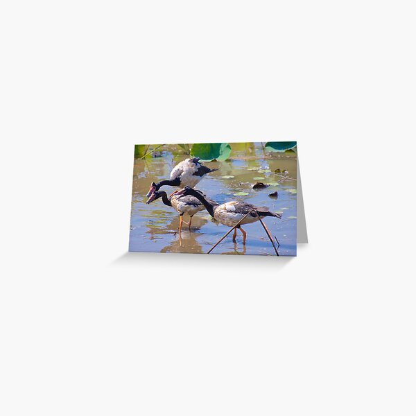 NT ~ WATERFOWL ~ Magpie Goose by David Irwin 071119 Greeting Card
