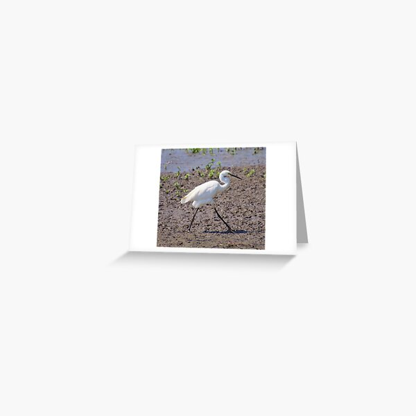 NT ~ WADER ~ Little Egret by David Irwin 071119 Greeting Card