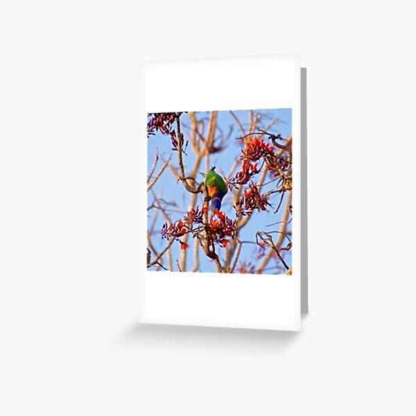 NT ~ PARROT ~ Ringneck Lorikeet by David Irwin 071119 Greeting Card