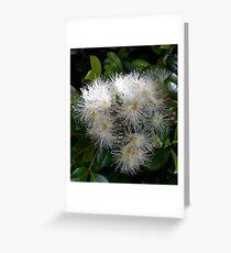 Lilli Pilli Flowers Greeting Card