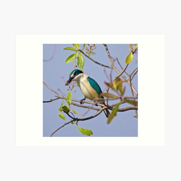 NT ~ KINGFISHER ~ Sacred Kingfisher by David Irwin 071119 Art Print