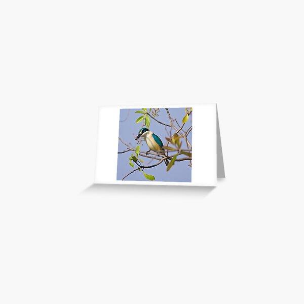 NT ~ KINGFISHER ~ Sacred Kingfisher by David Irwin 071119 Greeting Card