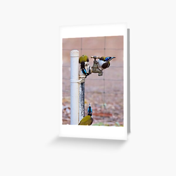 NT ~ HONEYEATER ~ Blue-faced Honeyeater by David Irwin 071119 Greeting Card