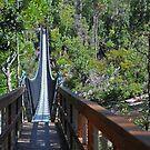 Swinging Bridges by mspfoto