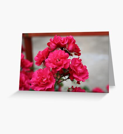 Pretty Pink Roses Greeting Card