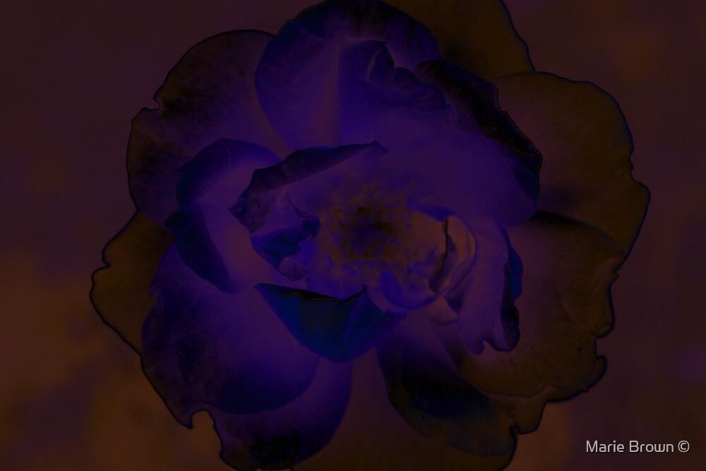 Purple Rose by Marie Brown ©