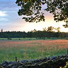 Field at Sunset by Hilda Rytteke