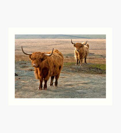 Beautiful Highlanders Art Print