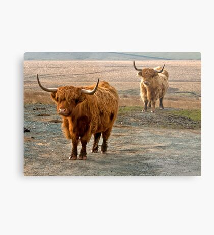 Beautiful Highlanders Metal Print